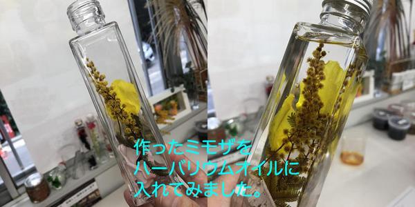 mimosa20180323-03.jpg
