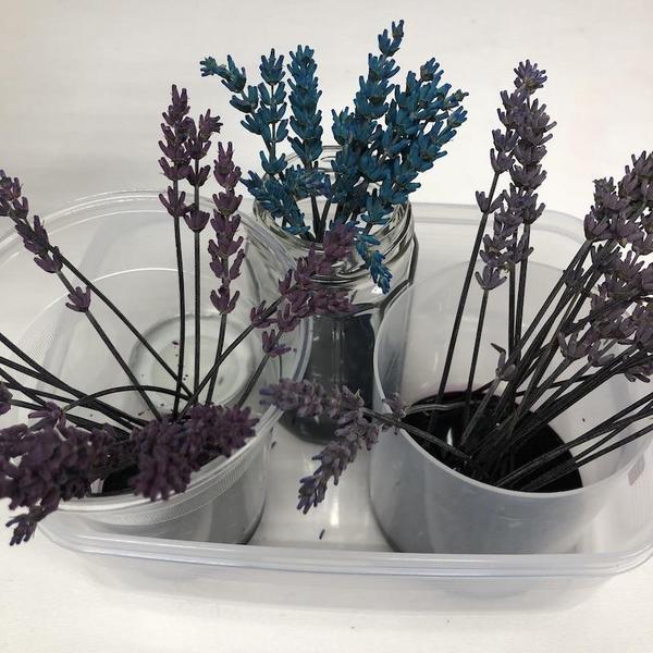 lavender201805-02.jpg