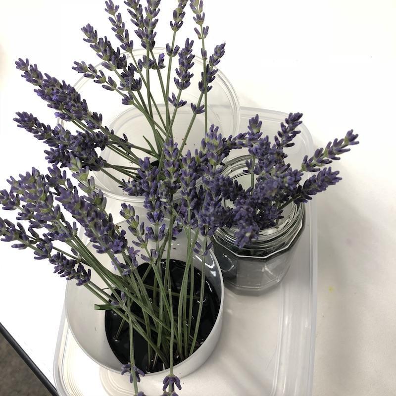 https://www.hanadaigaku.com/tenchoblog/images/lavender201805-01.jpg